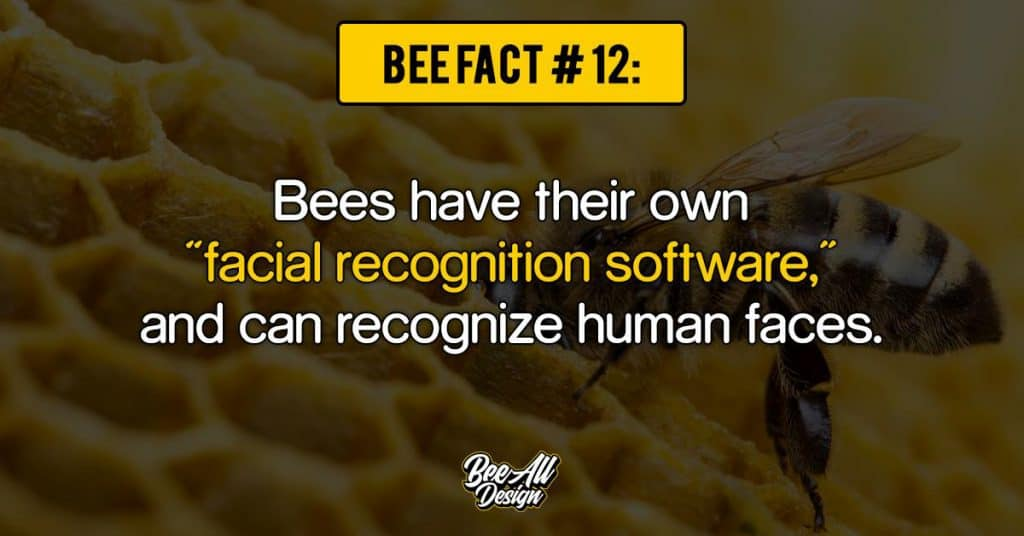 bee facts #12: facial recognition software