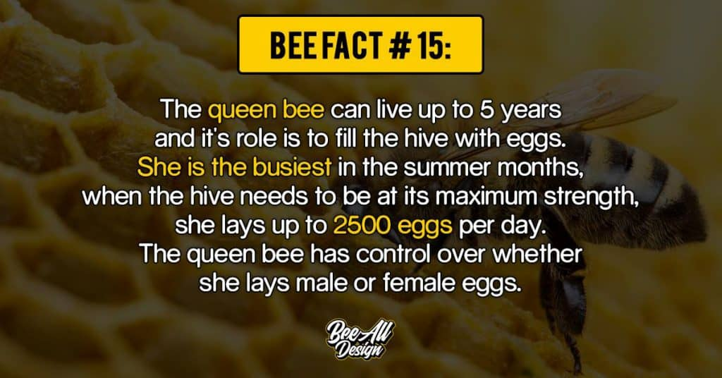 bee facts #15: queen bee can live up to 5 years