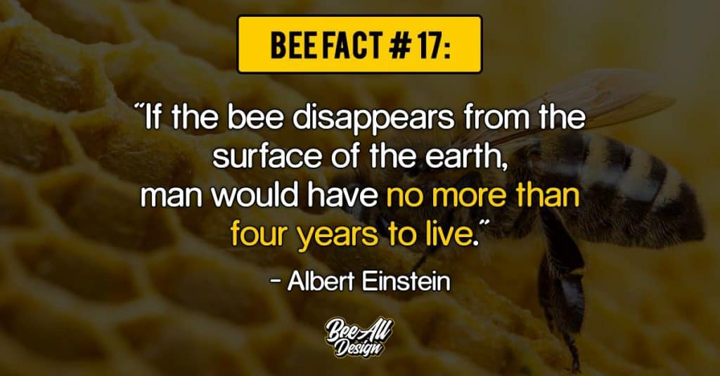 bee facts #17: If the bee disappears