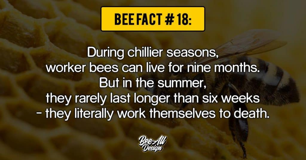 bee facts #18: During chillier seasons