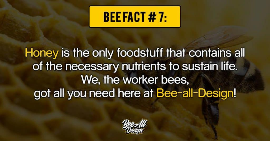 bee facts #7: Bee all Design