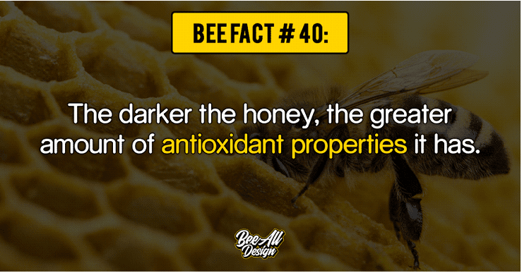 Bee Fact #40: antioxidant properties