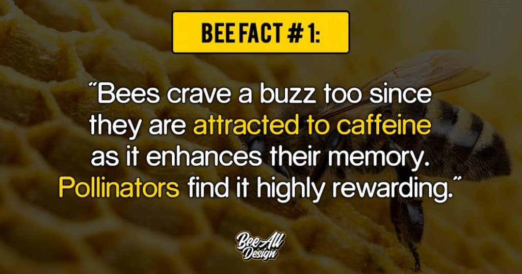 bee fact #1: bees are attracted to caffeine