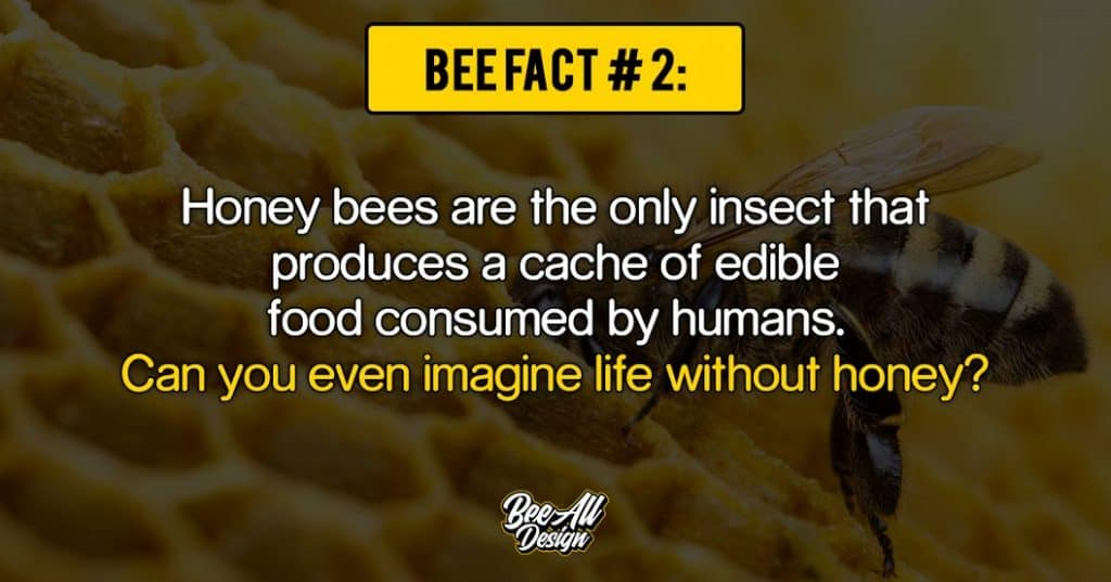 bee fact #2: Can you even imagine life without honey?