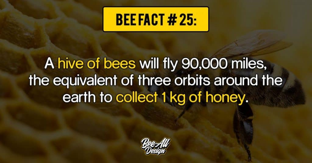bee fact #25: hive of bees