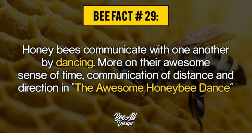 bee fact #29: The Awesome Honeybee Dance