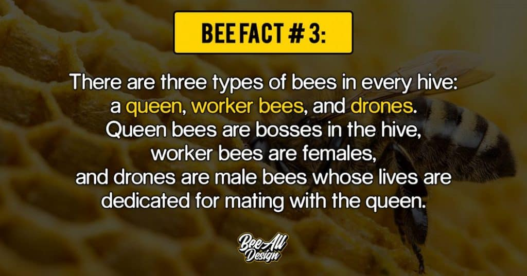 bee fact #3: a queen, worker bees, and drones