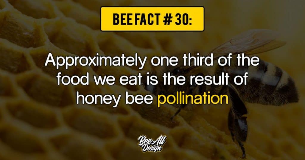 bee fact #30: pollination