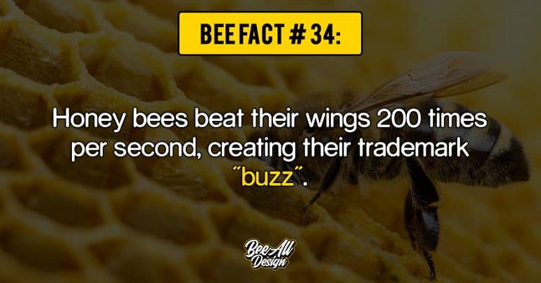 bee fact #34: buzz