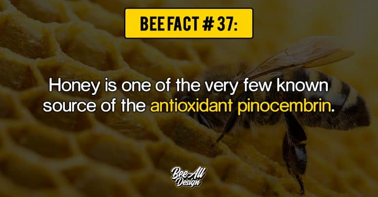 bee fact #37: antioxidant pinocembrin