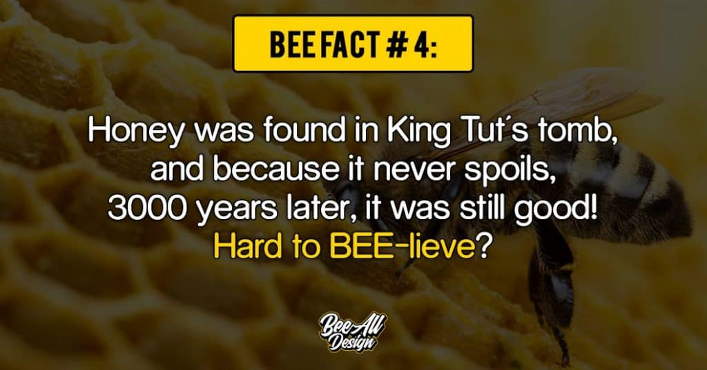 bee fact #4: Hard to bee-lieve?