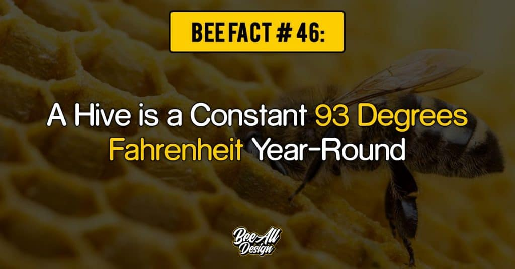 bee fact #46: Hive is a Constant 93 Degrees Fahrenheit