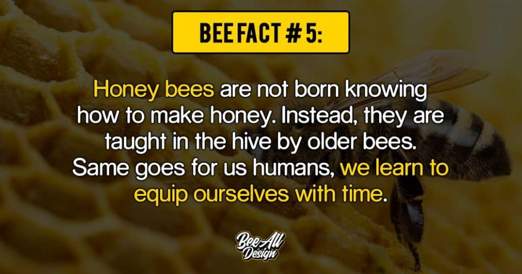 bee fact #5: we learn to equip ourselves with time