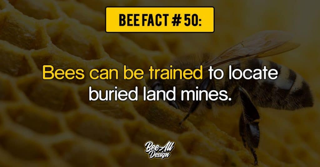 bee fact #50: Bees can be trained