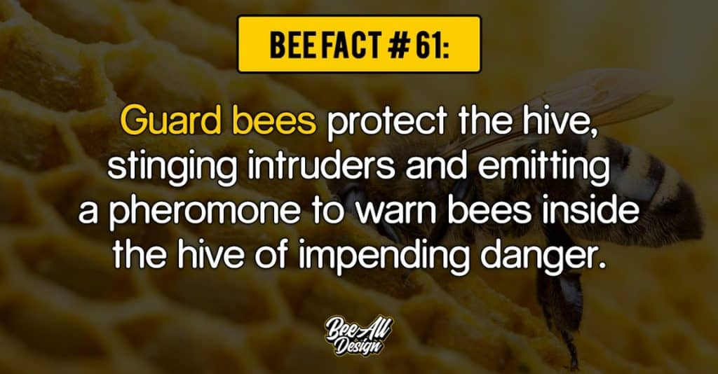 bee fact #61: Guard bees