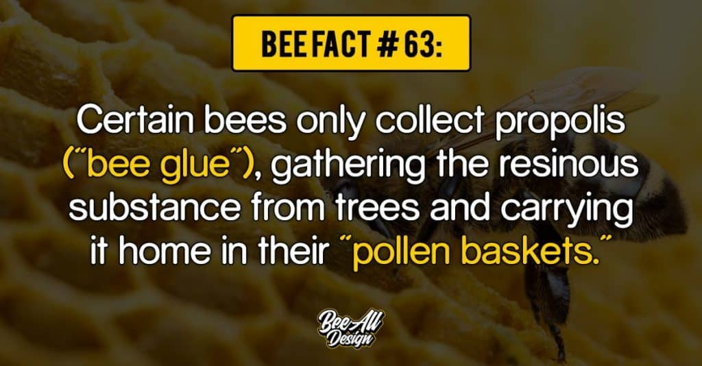bee fact #63: pollen baskets